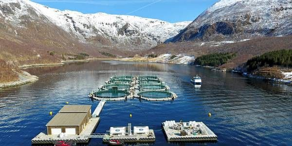 Dear Patagonia: Here's what you don't understand about salmon farming