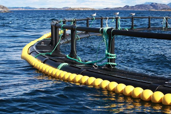 How to become data-driven in aquaculture